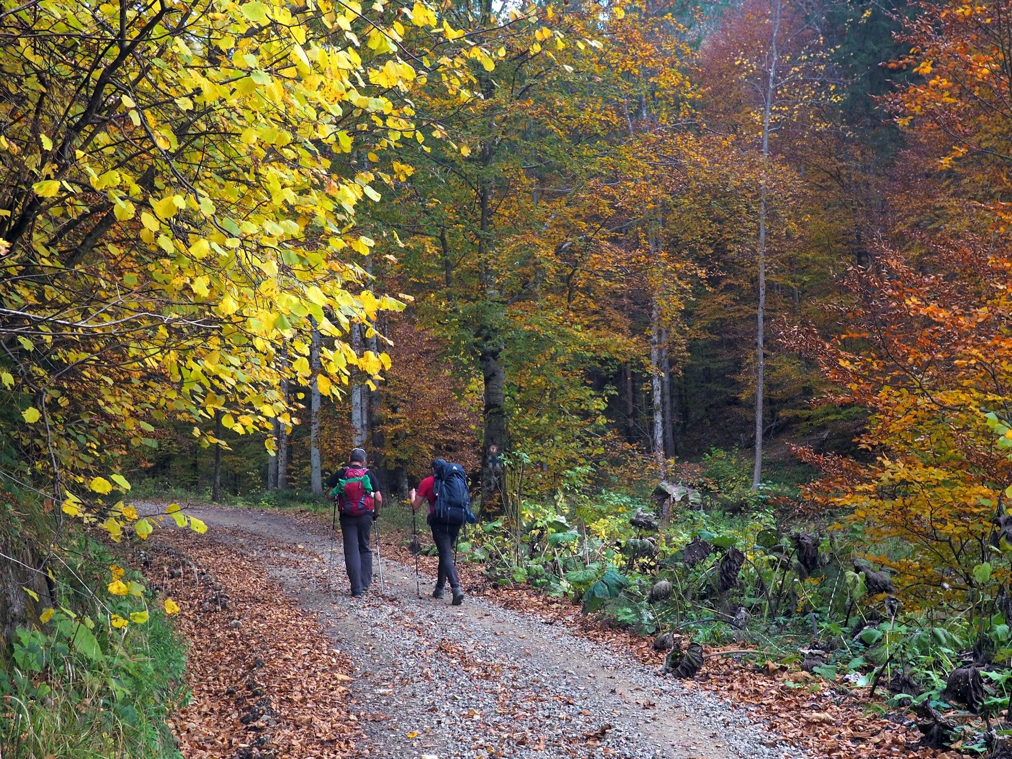 Ce poți vizita pe Via Transilvanica (Ruta Archita-Criț)?