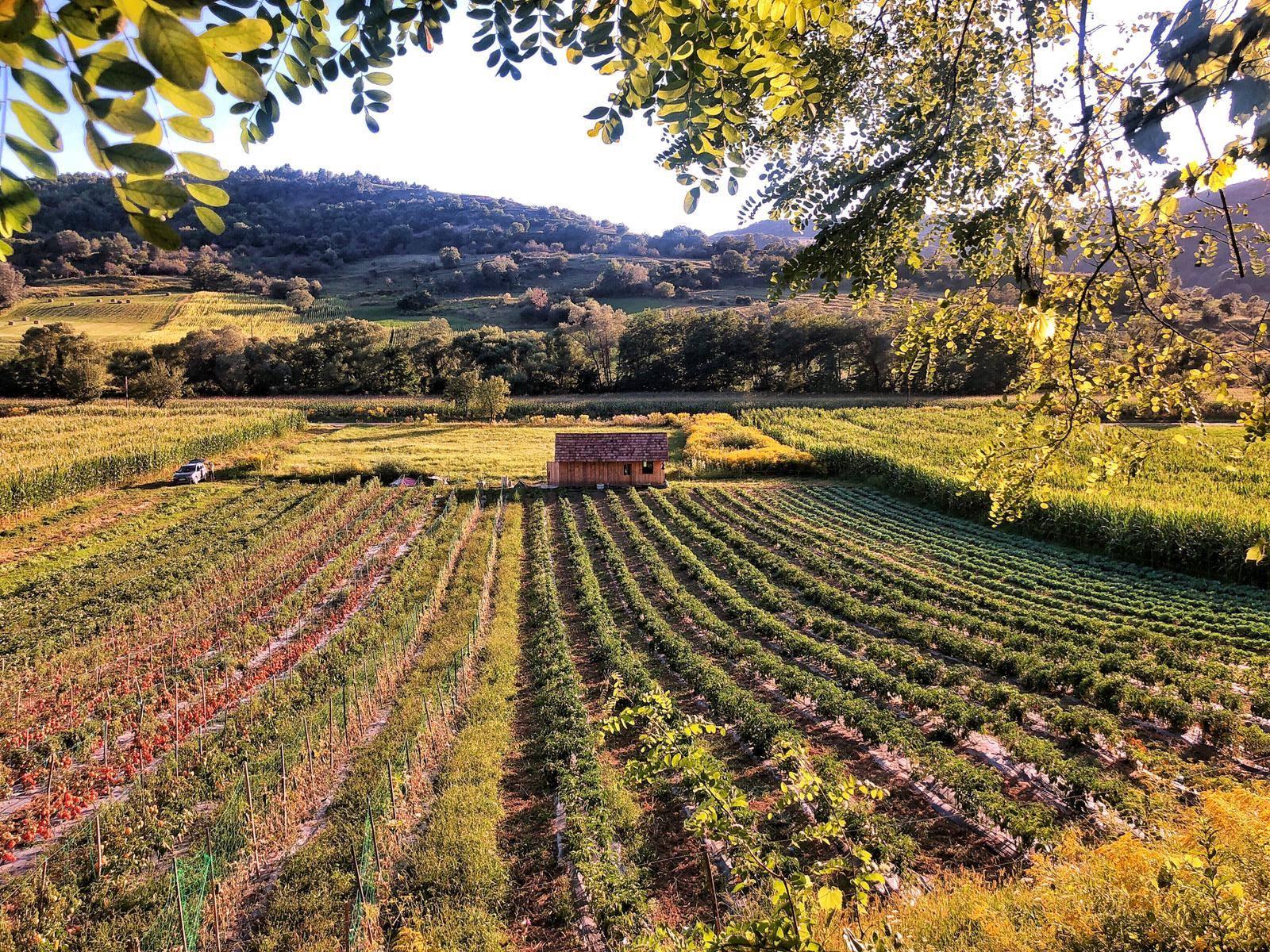 Mâncare locală din Colinele Transilvaniei, în zona Sighișoara
