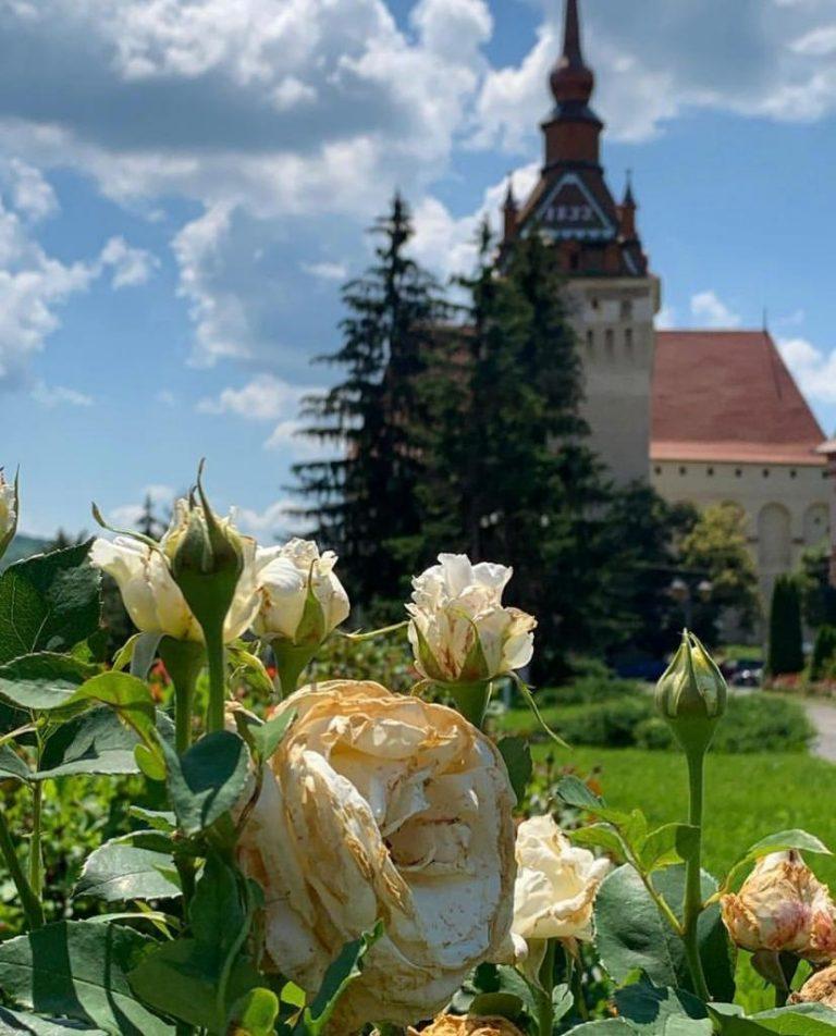 filmat transilvania